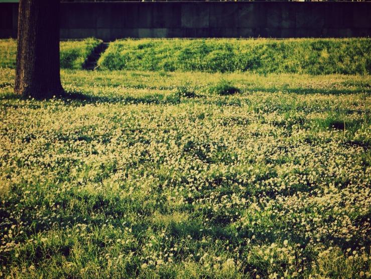 """""""Daisies in Primavera"""""""
